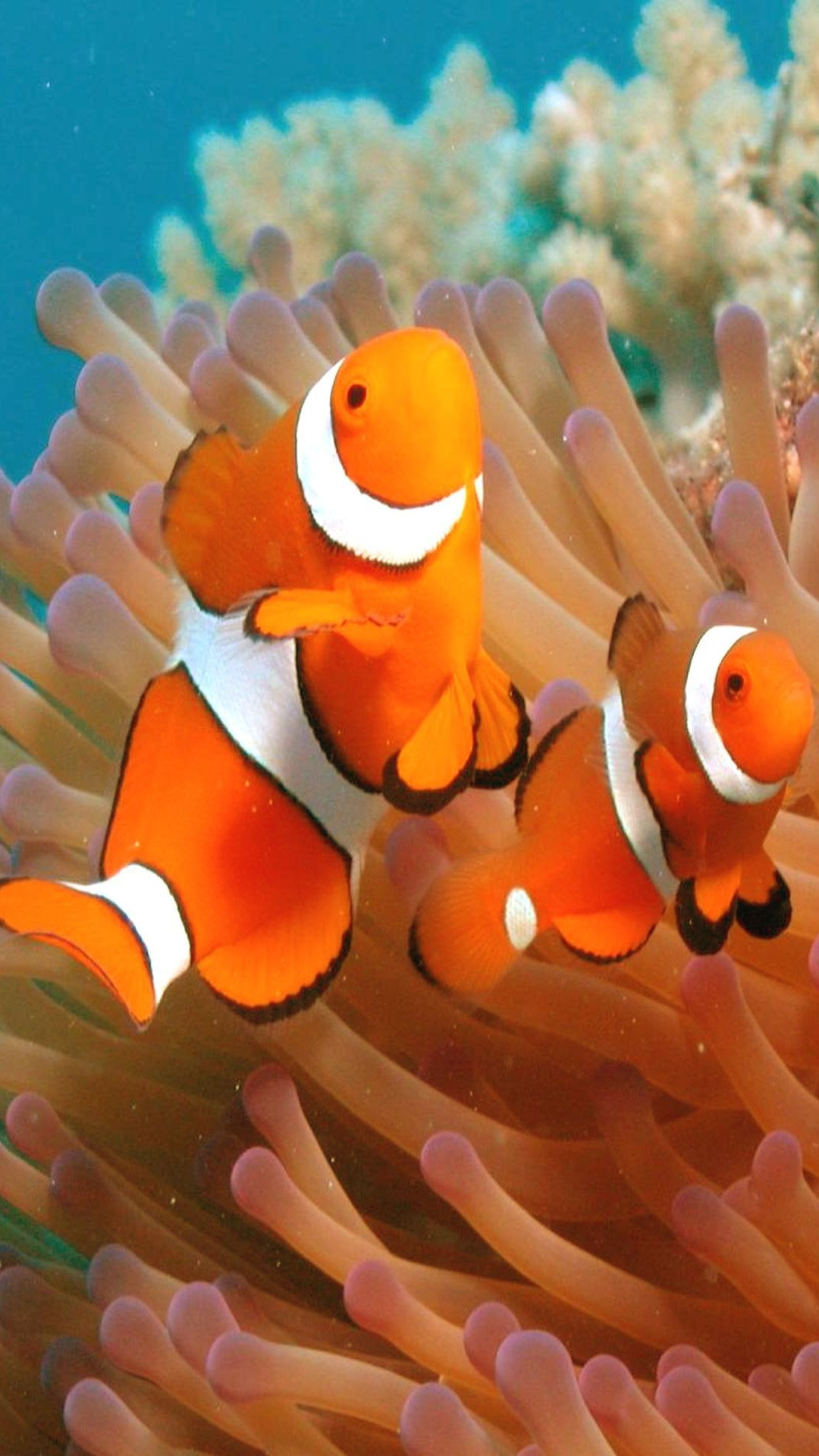 Amazing Wallpaper Fish Touch - Wallpapers-For-Galaxy-S4-Aquarium-34  Pictures_55370 .jpg