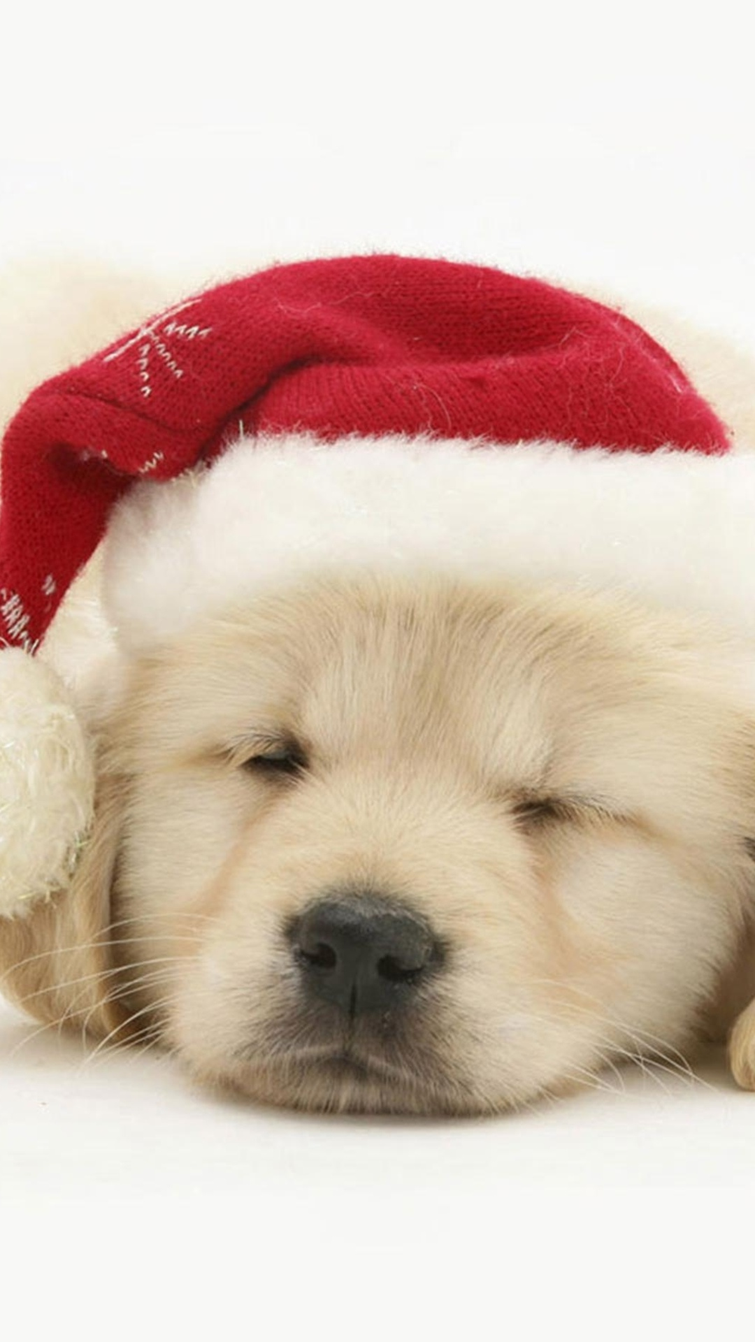 Wallpapers for galaxy puppy santa claus wallpaper - Galaxy christmas wallpaper ...
