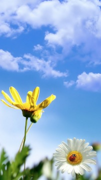Background with daisy flower